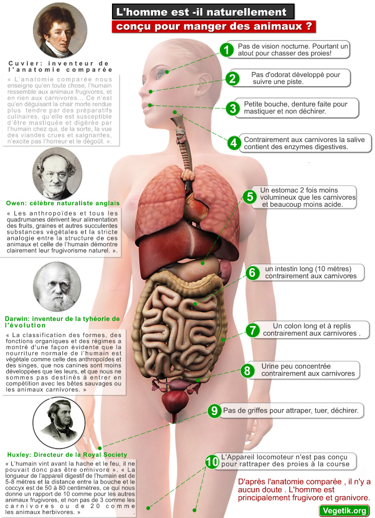 anatomie_comparee