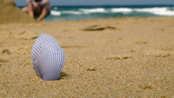 beach-758293_1280