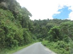 Carretera que cruza Nyungwe