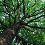 albero-150×150