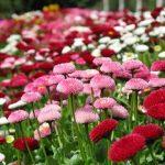 Piante e fiori protagoniste ad Ovada