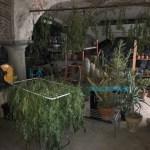 Grossista di marijuana arrestato nell'acquese