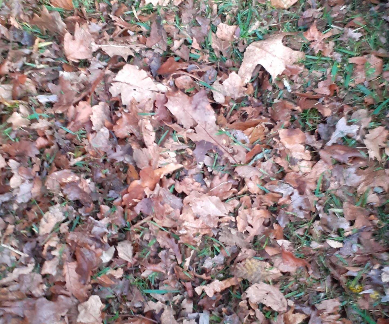 Autumn Automne La Rabine Jardin