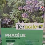 Engrais vert_Phacélie_Phacelia
