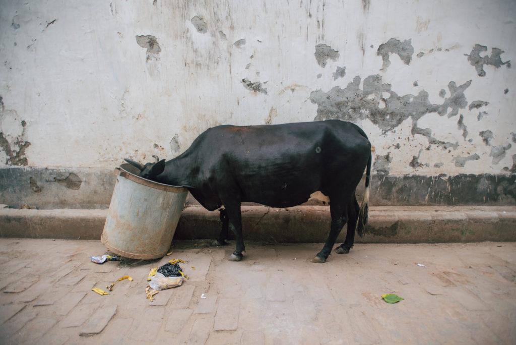 Varanasi Low Res-16