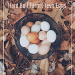 How To Boil Farm Fresh Eggs. How to hard boil eggs so they peel easily.