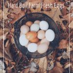 How To Boil Farm Fresh Eggs. How to hard boil eggs so they peel easily.