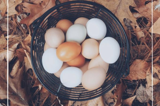 How to Boil Farm Fresh Eggs So They Peel Easily
