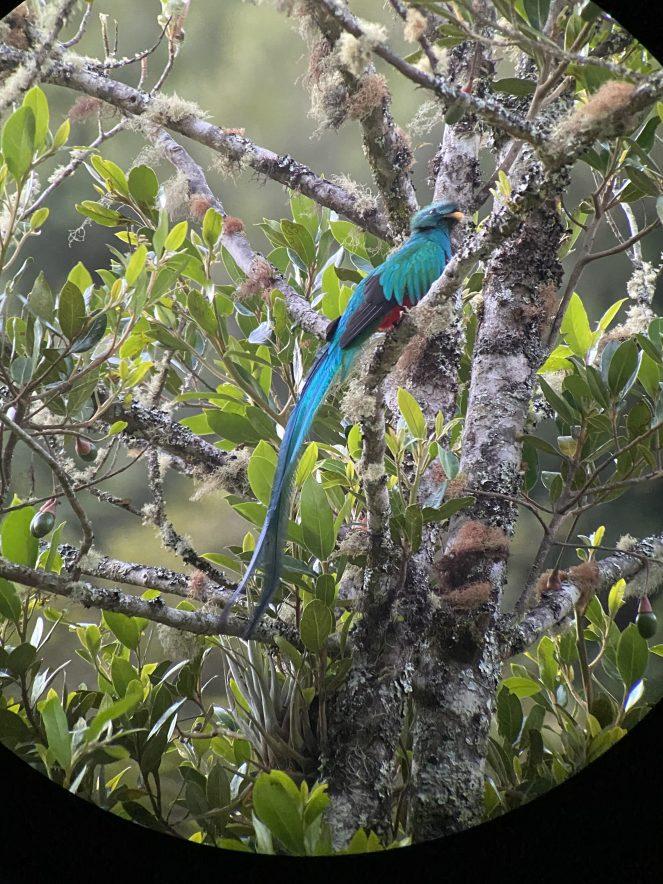 Quetzal bird near Savegre Lodge, Costa Rica