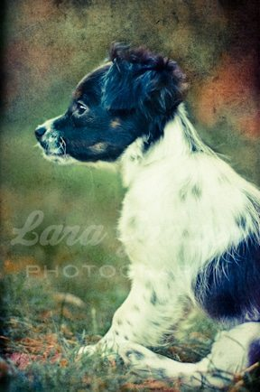 A sample piece from my new project, combining dogs with cool, gritty, elaborate textures.