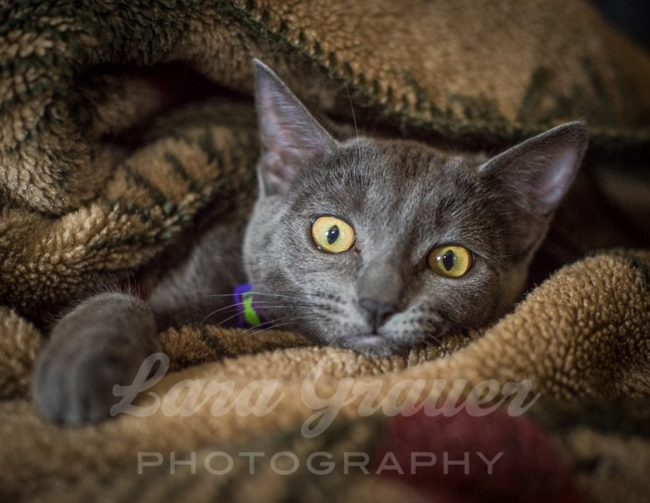 Silly+Kitten+in+a+Blanket