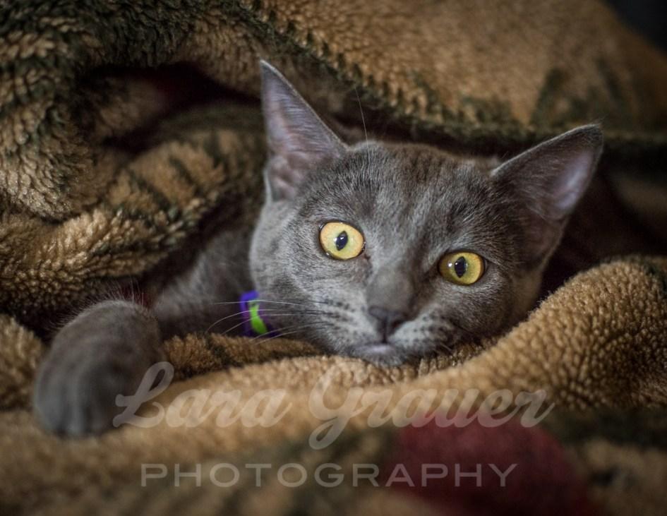 Silly+Kitten+in+a+Blanket