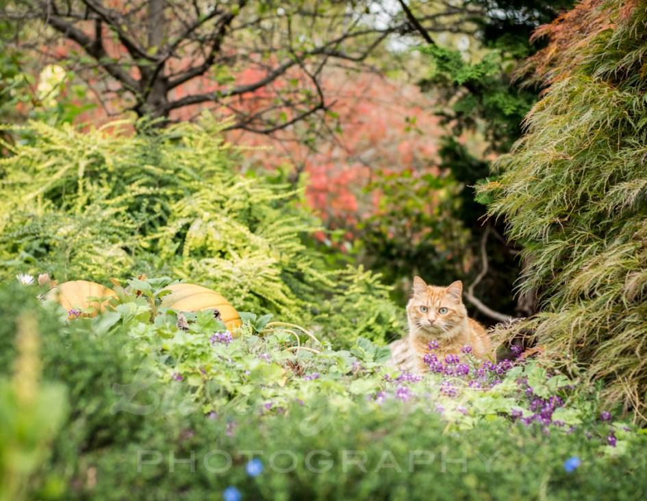 Cat+in+the+garden