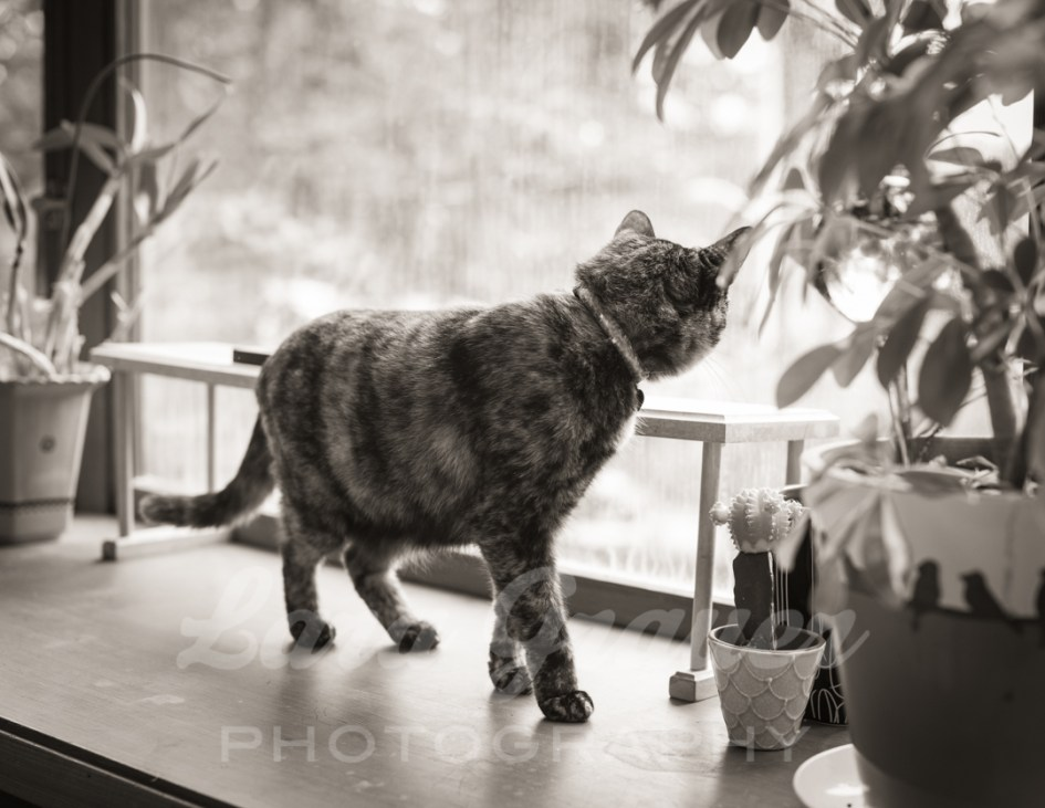 Cat+in+the+window