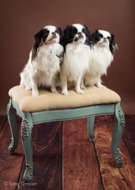 Three+Amigos