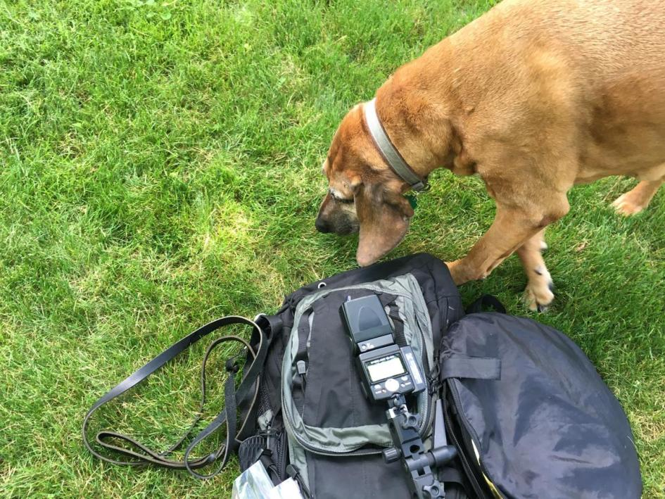 The smell of hotdogs and camera gear was too much for Gretchen to resist!