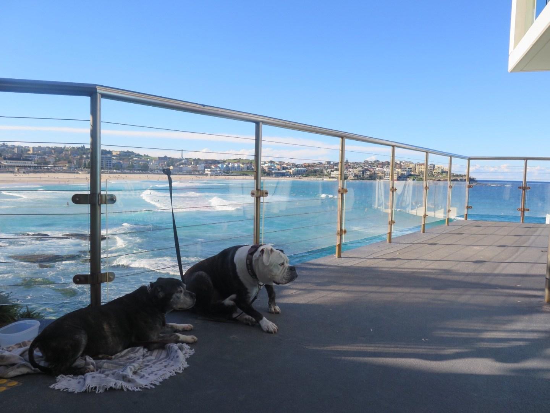 Dogs Bondi beach Lara Lain