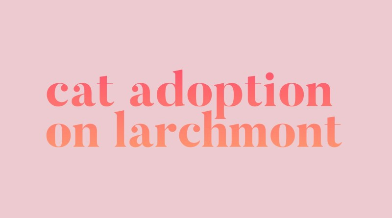 Cat Adoption on Larchmont