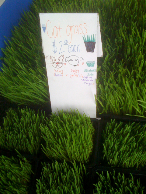Wheatgrass for cats and dogs