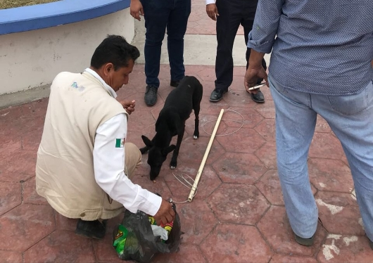 Municipio va por perros de Miramar