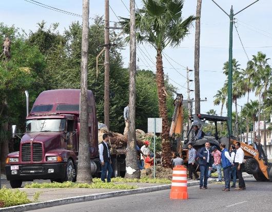 Mejoran el paisajismo urbano de Tampico