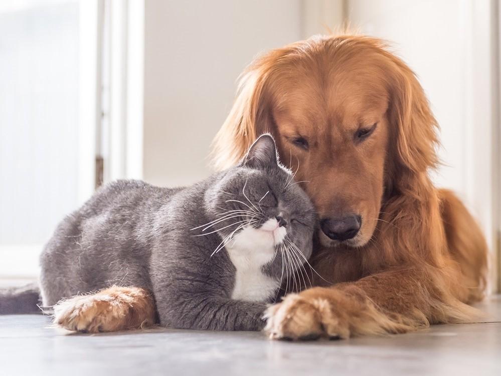 Si tus mascotas se quedan solas en casa, Spotify crea 'Pet Playlist'