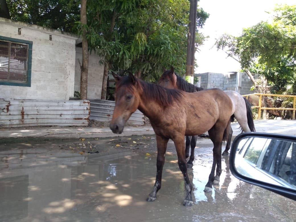 Descuidan carretoneros a sus caballos