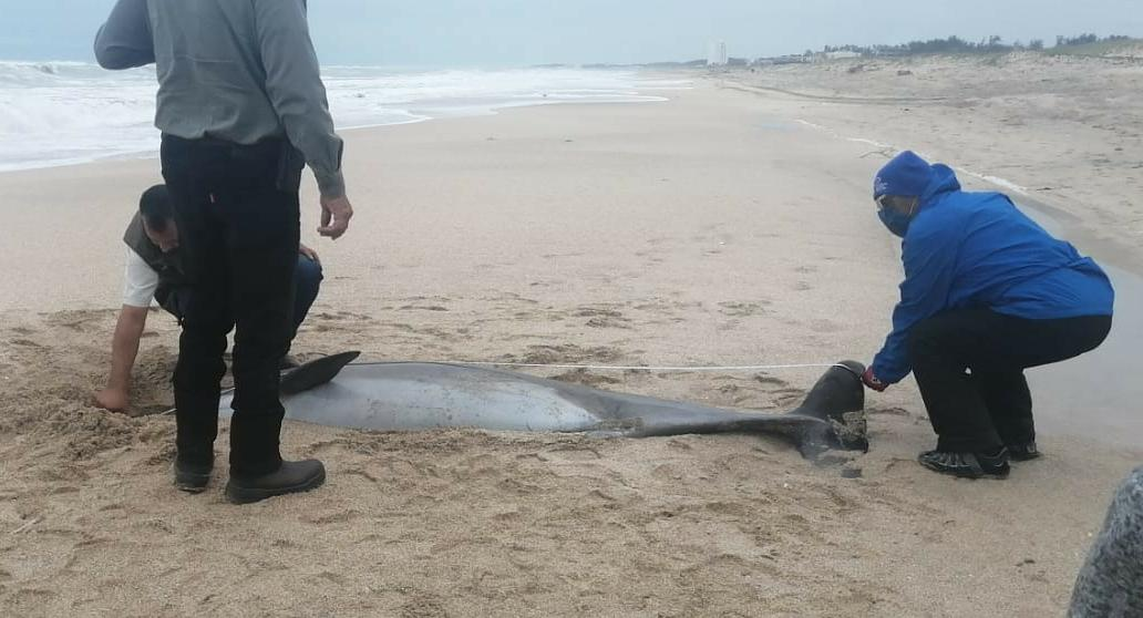 Aparece cadáver en Playa Miramar