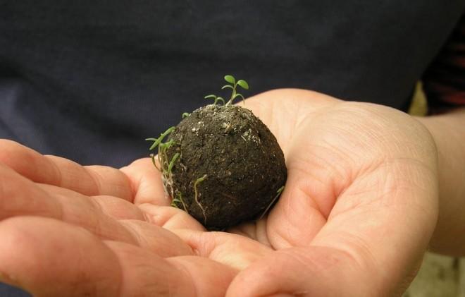 Le Seed Bombing, des armes écologiques au service des citoyens.