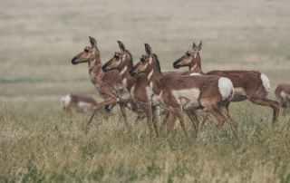 herd of brown doe walking on field