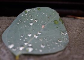 Droplets of beauty laying on the bridge. Mar 01 Photo/Marivel Guzman
