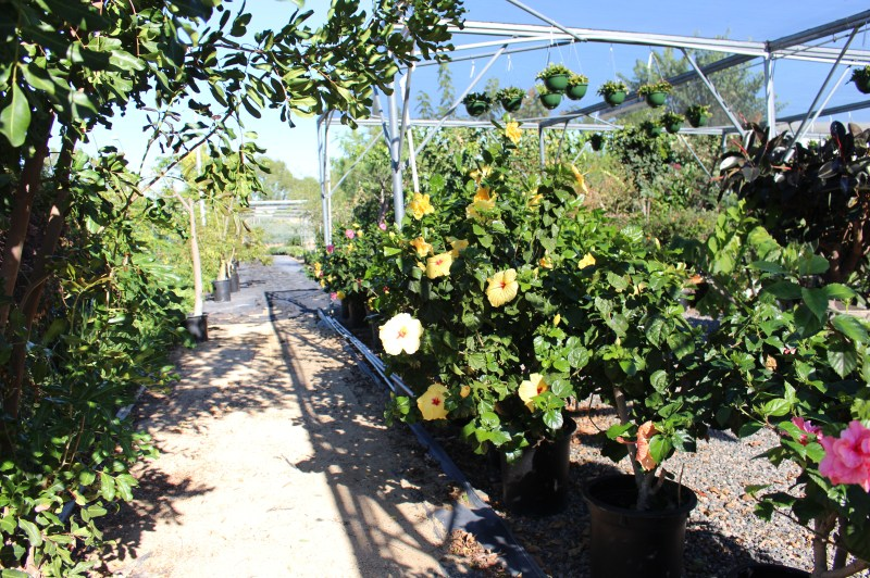 Saddleback College horticulture green house sale Thursday and Friday November 20th and 21st, 9:00am to 5:30pm (Photographs/Dominic D. Ebel)