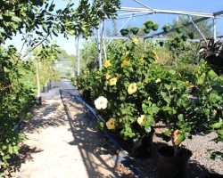 earth week horticulture department plants on campus