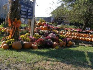 American pumpkin patch displaying various sizes and shapes