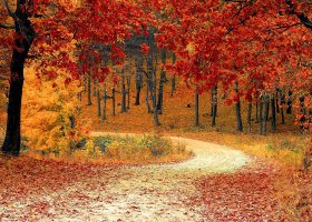 Fall is here, time to enjoy the cold weather and vibrant colors.