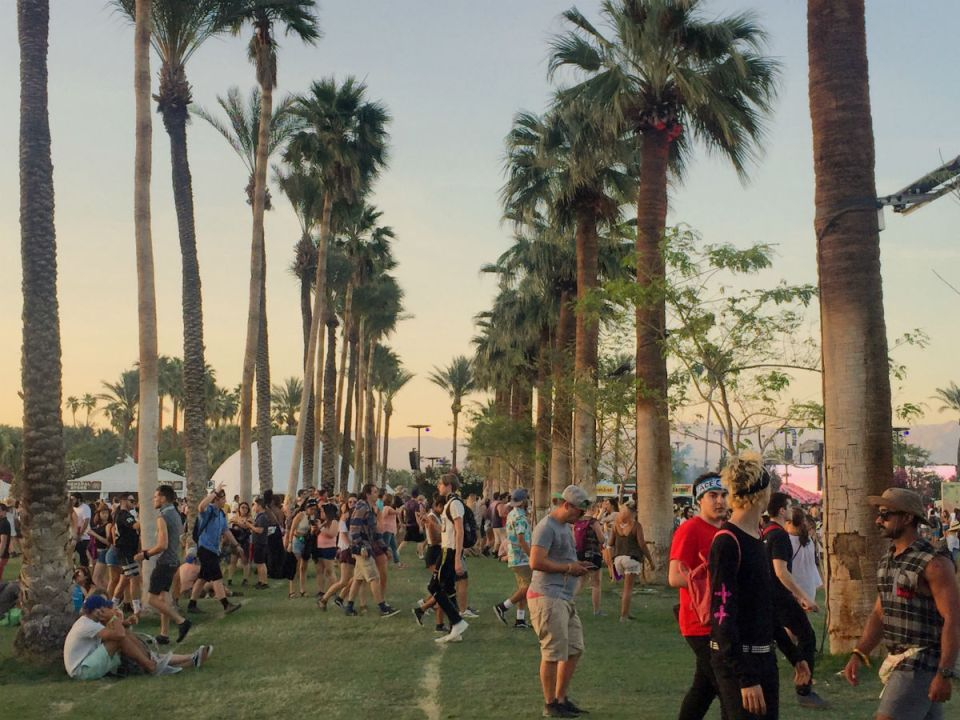 Tunnel of palm trees at Coachella