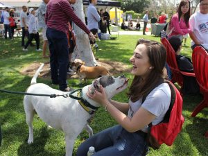 A dog showing random people love perfectly sums up the day, on Thursday, April 27, 2017. (Taya Buehler-Reagan)