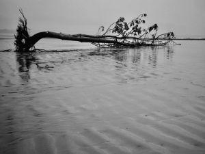 Tree branch in black in white floating in the sea