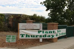 The Ceramics and Horticulture Department collaborated for a potted plant sale at the Saddleback College Greenhouse (Joseph Fleming/Lariat)