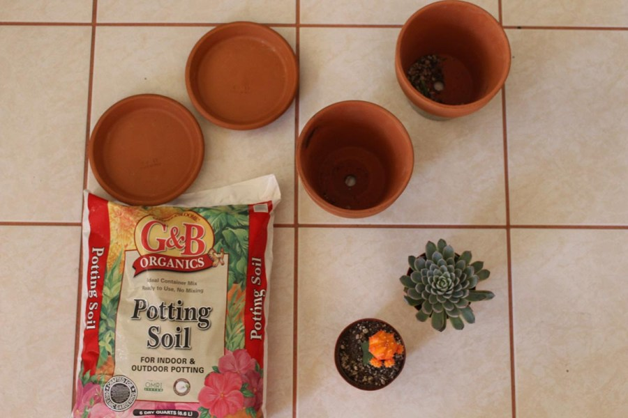 Step #1: To create a DIY succulent, you need two six inch clay planter pots, two 6.4 inch clay pot saucers, Gardner and Bloome's organic potting soil and your choice of succulents.