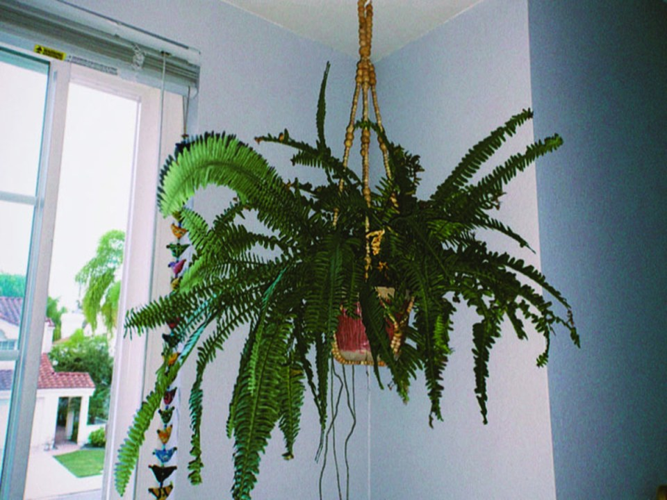 A potted sword fern dangling from the ceiling in a beaded holder to portray a more bohemian flare to the room.