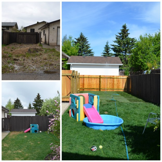 backyard collage