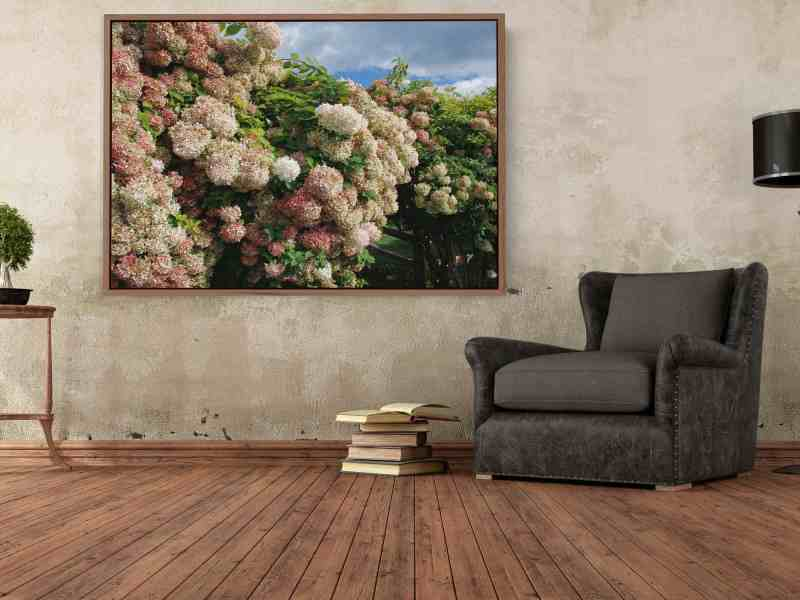 photograph of hydrangeas on plaster wall