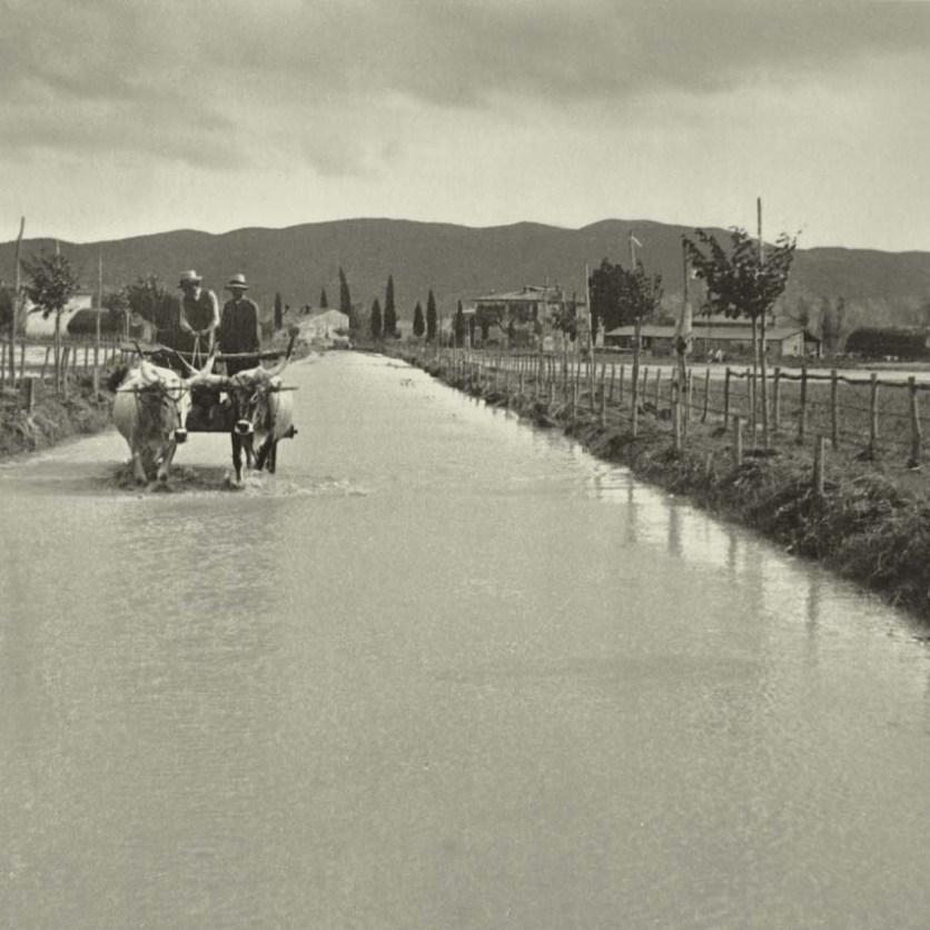 Strada allagato, San Donato, Grosseto, 1937.
