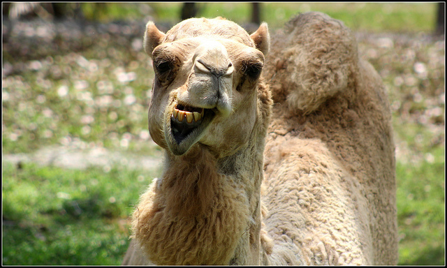 """Modi di dire: la """"saggezza"""" tradotta dai proverbi arabi"""