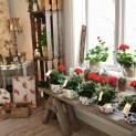 Så här fint var det i gårdsbutiken då Ängås Trädgård öppnade för säsongen. Foto: AnnCharlotte Gustavsson