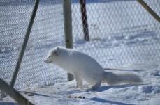 Affordable Vacation in Whitehorse | Yukon | Canada | Travel Adventures | Larkycanuck.com