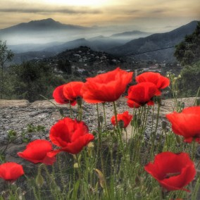 View of Maroma, with poppies .