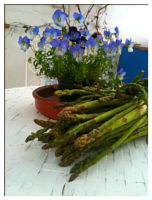 Handpicked asparagus