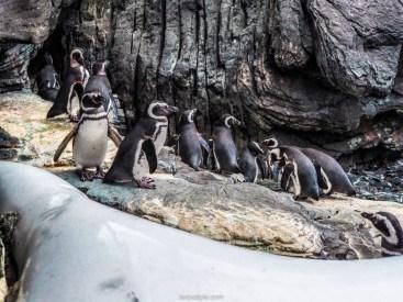 5 lieux a ne pas manquer a Lisbonne - oceanarium de lisbonne